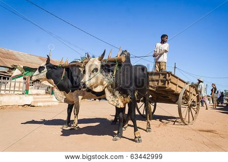 Zebu Cart