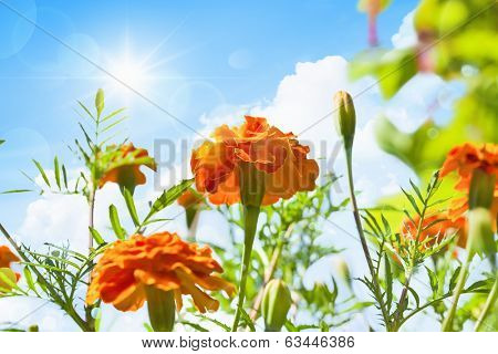 Spring flowers on a background of blue sky with clouds and sun