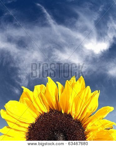 Sunflower With A Blue Sky