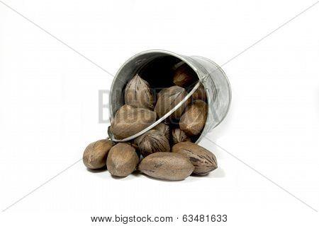 Overturned Bucket Spilling Freshly Picked Pecan Nuts