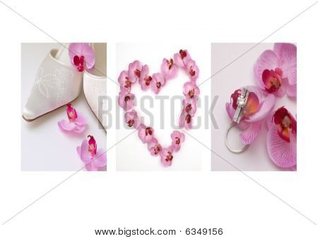 Orchid Wedding Triptych