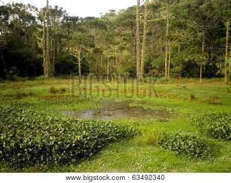 Pantanal Brazil Swamp
