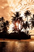 Tropical beach on sunset, beautiful card with silhouette of palm trees on cloudy sky background, lux