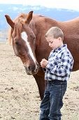 picture of feeding horse  - Young boy in blue feeding his horse treats - JPG