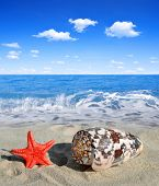picture of conch  - Conch shell with starfish on beach - JPG