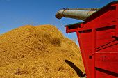 stock photo of threshing  - The straw and chaff are blowing in the air as it leaves the blow pipe of the threshing machine - JPG