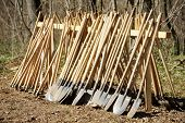 stock photo of hoe  - Stack of shovels and hoes before afforestation - JPG