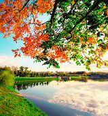 Beauty color autumn picturesque park in sunny day with country blue cloudy sky rural scenic Fresh di