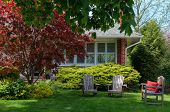 picture of lawn chair  - Three chairs on a lawn in front of a house with red maple tree - JPG
