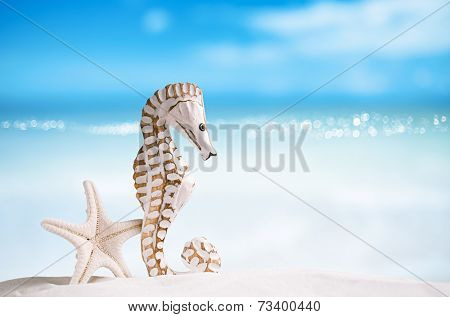 seahorse with white starfish on white sand beach, ocean,   sky and seascape, shallow dof