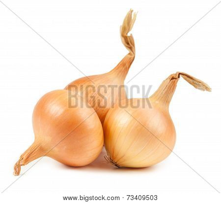 Onion vegetable bulbs on white background