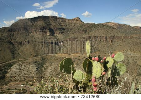Prickly Pear Cactus And Sandstone Mountain - Arizona