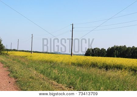 Field with yellow flowers and poles with power lin