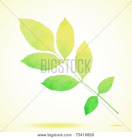 Green watercolor painted vector ash tree leaf