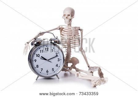 Skeleton with alarm clock on the white
