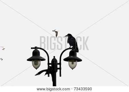 Crow Perched On Top Of Streetlight
