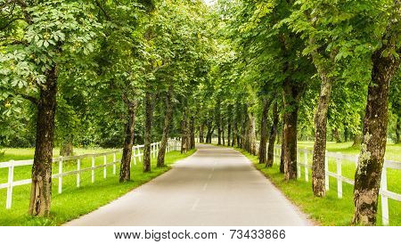 Road With Trees And White Fence
