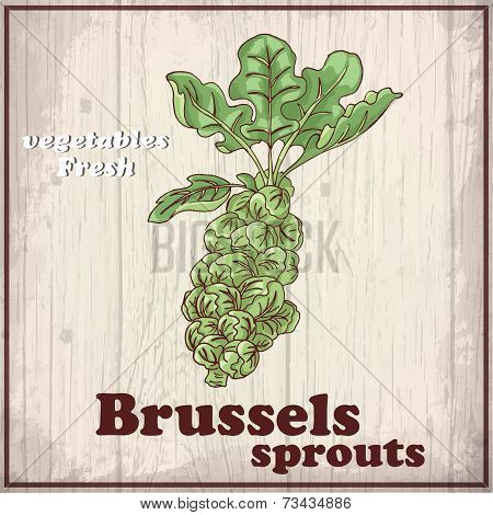 Fresh Vegetables Sketch Background. Vintage Hand Drawing Illustration Of A Brussels Sprouts