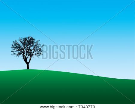 Winter tree on hill