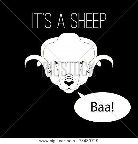 Sheep Head saying baa