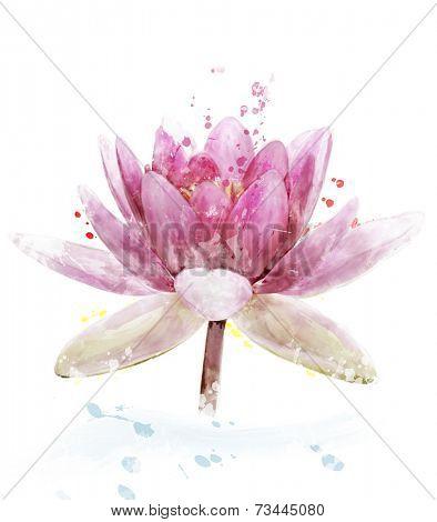 Watercolor Digital Painting Of Pink Waterlily Flower