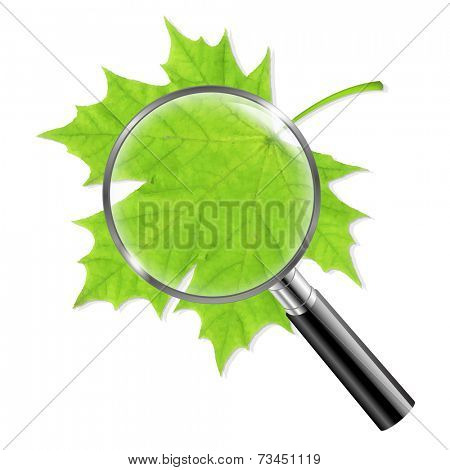 Magnifing Glass With Green Leaf With Gradient Mesh, Vector Illustration