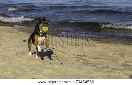 Fetch On The Beach