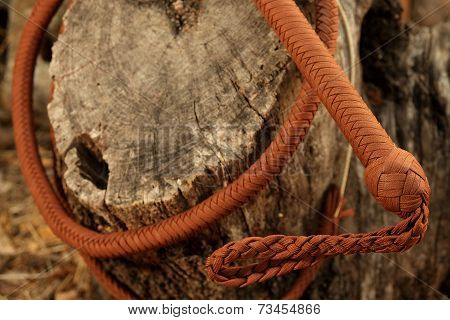 Cowboy Whip Curled Around Tree Trunk