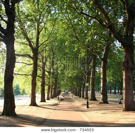 Tree-lined path (Green Park, London)