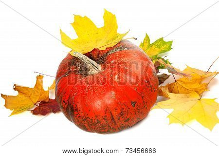 Red Ripe Pumpkin And Autumn Leaves