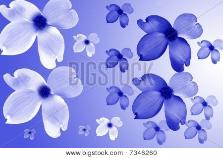 Blue and White Dogwood Flowers