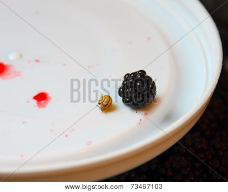 A baby snail next to a blackberry