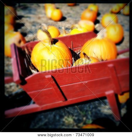 Instagram filter image of a  red wheelbarrow and pumpkins