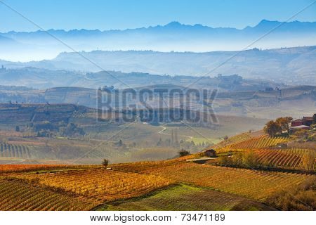 Autumnal vineyards and foggy hills on background in Piedmont, Italy.