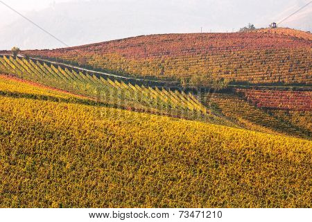 Colorful autumn vineyards on the hills of Piedmont, Northern Italy.