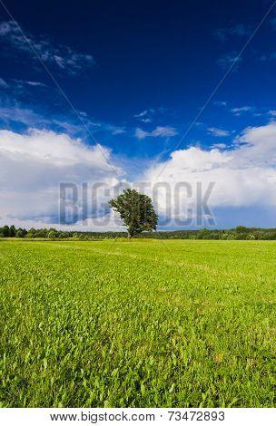 Plain Nature Vibrant Summer