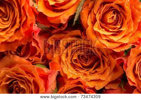 Background Texture Of Romantic Orange Roses