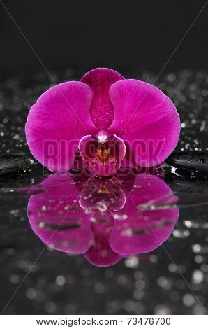 Macro of red orchid on black stones background-reflection