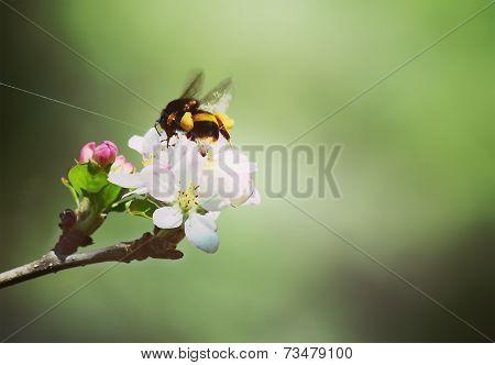 Vintage Bumblebee