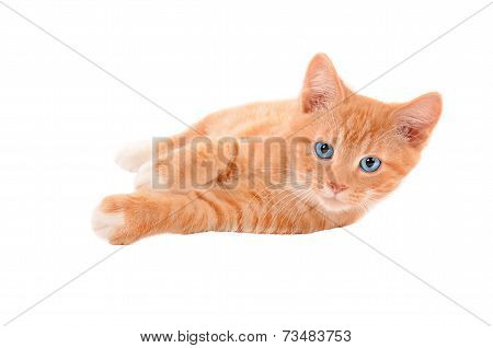 Ginger Kitten Laying On A White Background