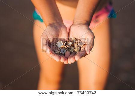Cockleshells In Hands