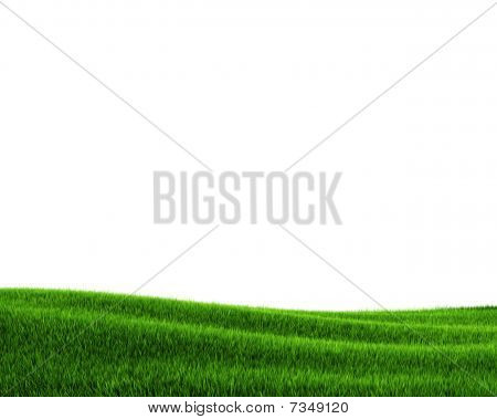 Green grass field (3d rendering)