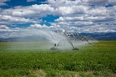 picture of alfalfa  - Center pivot agricultural irrigation system in an alfalfa field - JPG