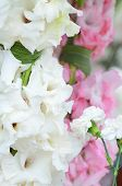 picture of gladiolus  - beautiful bouquet of white gladioluses - JPG