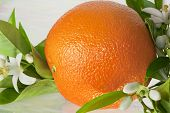 stock photo of orange blossom  - This is a photo of an orange with orange blossoms - JPG