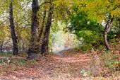 stock photo of ash-tree  - Autumn forest path between maple birch poplar and ash trees in a sunny day - JPG