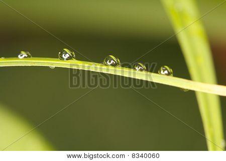 Water Drops In A Row / Wassertropfen In Einer Reihe