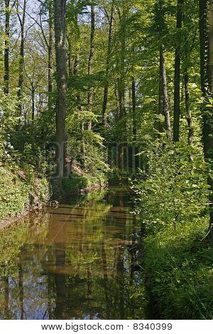 Little brook in Lower Saxony, Germany