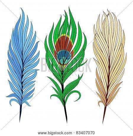 Set Of Bird Feathers