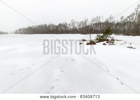 Winter Rural Scene With Fog And White Fields